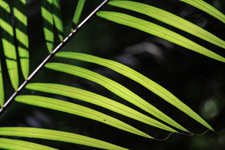 silhouette view of green leaf at asian forest Stock Photo