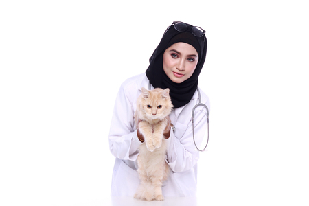 muslimah: muslimah doctor holding a cat isolated in white background