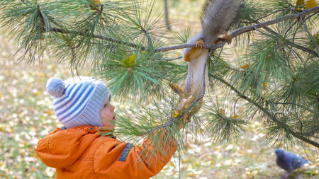 child squirrel feeding from hand Stock Photo