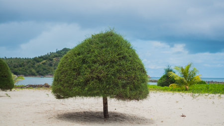 untouched: Tropical trees on the coast. PHANGAN, THAILAND.