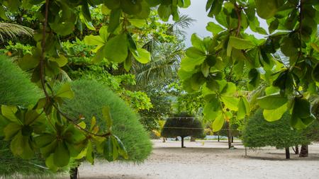 Tropical trees on the coast. PHANGAN, THAILAND.