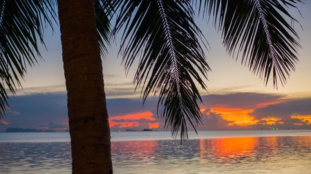 untouched: The suns rays passing through the palm branch. Tropical trees on the coast. Sunset time