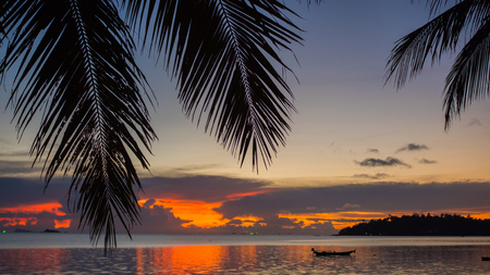 The suns rays passing through the palm branch. Tropical trees on the coast. Sunset time