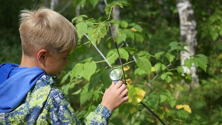 Schooljongen in het park studies van planten en nasekomye door een vergrootglas. Studie van de buitenwereld, voorschoolse educatie en schoolonderwijs Stockfoto