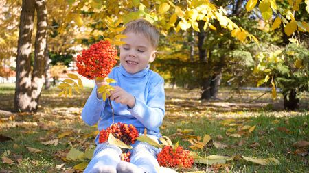 A child in the autumn Park plays and laughs merrily, he plays with yellow leaves and Rowan berries. Sunny autumn day in the Park. Outdoor entertainment 写真素材