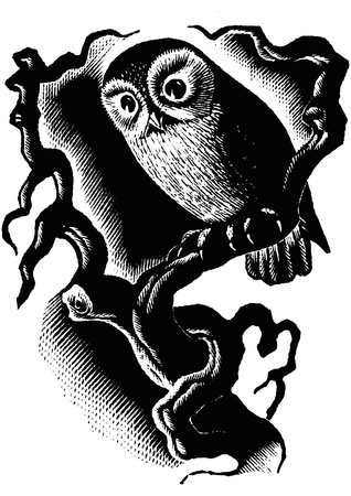 A retro engraved illustration of an owl staning on a branch at night