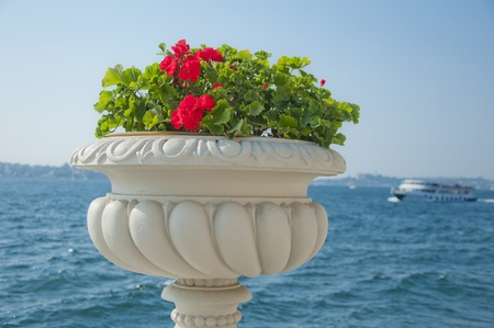 bosporus: Red Flower Against the Bosporus, Istanbul Stock Photo