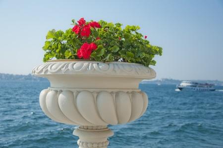 bosporus: Red Flower Against the Bosporus, Istanbul Stock Photo