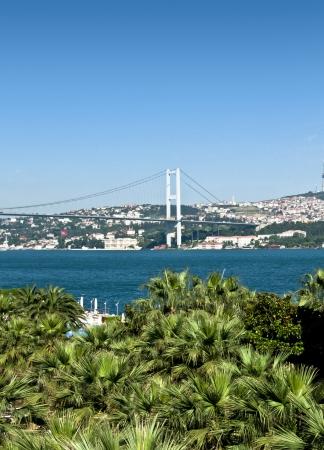 bosphorus: The Bosphorus Bridge behind green palm trees on a sunny day