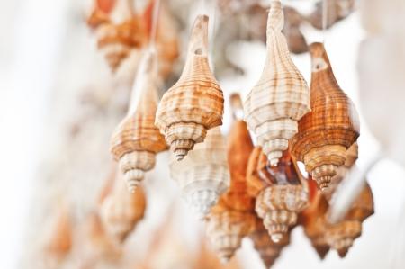 Hanging seashell accessories