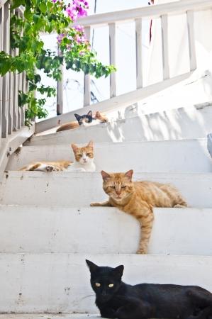 mykonos: Homeless cute cats in mykonos island