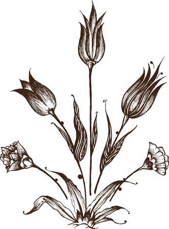 carnations: Beautiful hand drawn flower composition with tulips and carnations Illustration