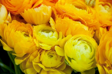 Shabby yellow roses photo