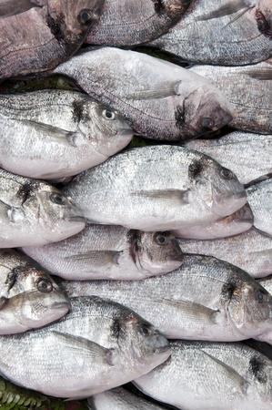 daurade: Pile of fresh fish in a fish market Stock Photo