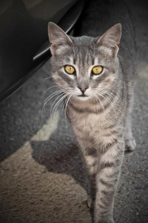 tabby cat: Street cat