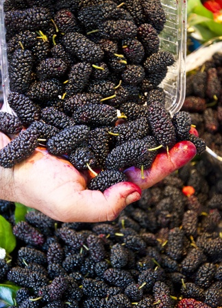bramble: Black mulberries Stock Photo