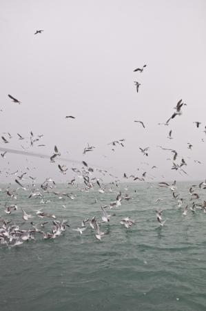 bosporus: Seagulls flying over the Bosporus Stock Photo