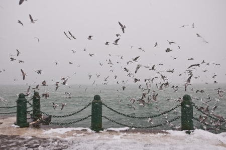 constantinople: Seagulls flying over the Bosporus Stock Photo