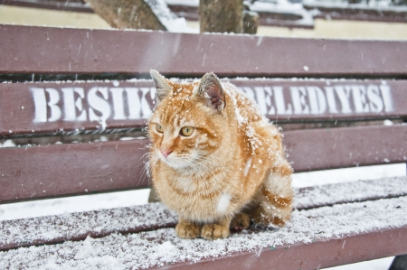 Homeless cat under the snow photo