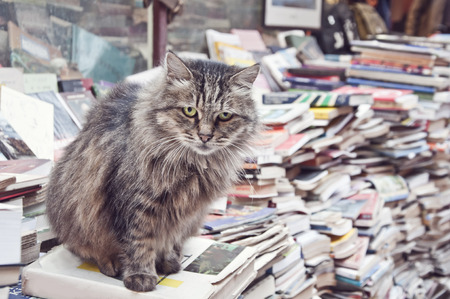 Cat on the books photo