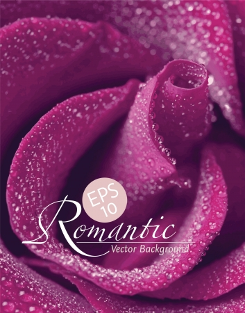 photoreal: Romantic pink-purple rose with water drops, photo-real vector