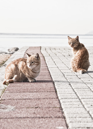 Two street cats photo