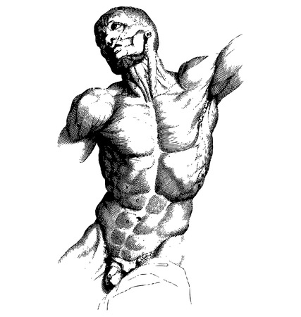 Ancient style engraving of a muscled male body stretching Vector