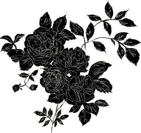 rose blanche: D�coratif noir bouquet de roses avec des contours, isol� noir sur blanc
