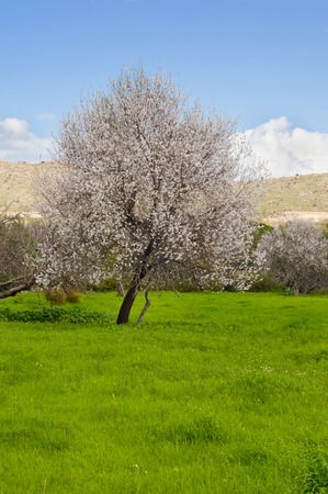 Blossoming Tree and Blue Sky Stock Photo - 25977780