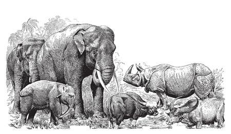 Ancient engraving of various wild animals; elephant, rhino, bison etc  Illustration