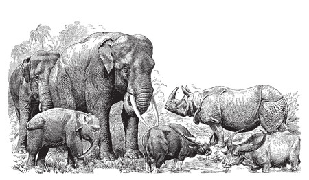 Ancient engraving of various wild animals; elephant, rhino, bison etc  Vector