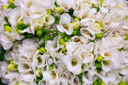 emigranti: Elegand wildflower bianco Archivio Fotografico