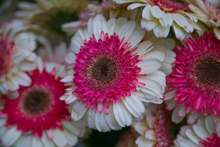 Pink and white flowers Stock Photo