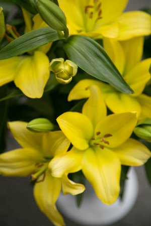 Yellow lilies photo