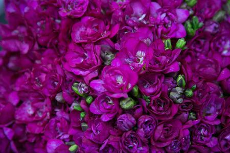 Magenta flowers photo