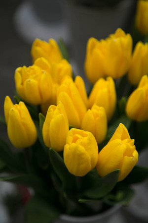 Bouquet of yellow tulips photo