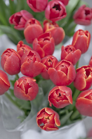Bouquet of red tulips photo