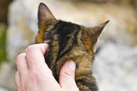 A man s hand caressing a street cat photo