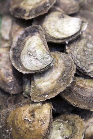 Pile of fresh oysters photo