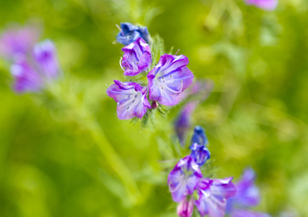 Purple wild flowers photo