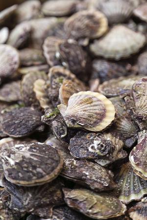 ostra: Pila de ostras frescas