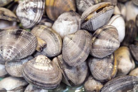 charleston: Pile of fresh oysters Stock Photo