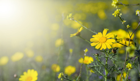 Yellow wild flowers photo