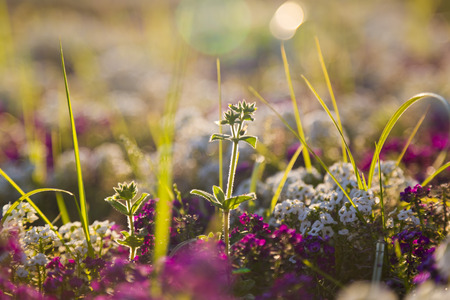 backlit: Wild flowers in spring time Stock Photo