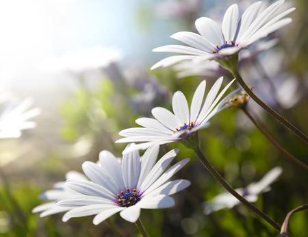 flower close up: Elegand white wildflower Stock Photo