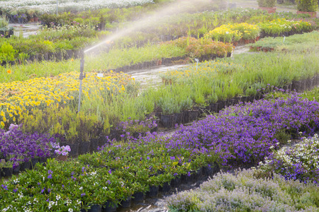 Irrigation device watering flowers photo