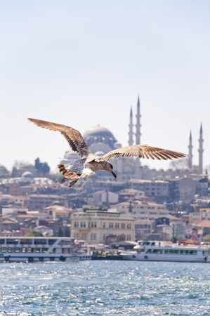 upclose: View of the Golden Horn or Halic and the historical Rustam Pasha Mosque with an up-close flying seagull in the focus