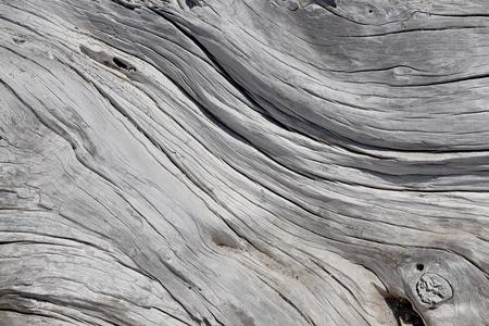 死んだ木のテクスチャ 写真素材