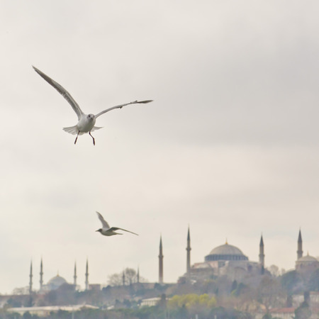 kadikoy: Two seagulls flying over Hagia Sophia and Sultanahmet, Istanbul