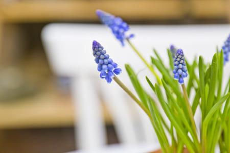 Purple wild flowers photo